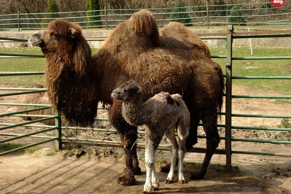 Ilustračný obrázok k článku Návštevnosť v košickej zoo po korone opäť rastie