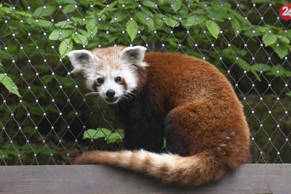 Ilustračný obrázok k článku Spišskonovoveská zoo otvára: Tešiť sa môžeme aj na úplne nové zvieratá