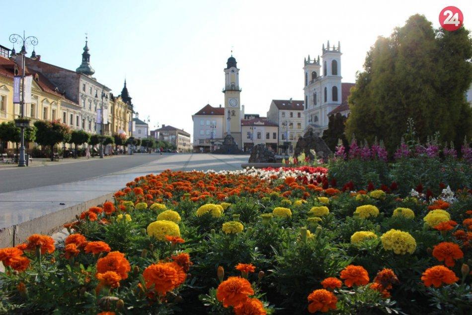 Ilustračný obrázok k článku Bystricu opäť rozžiaria kvety: Budúca výzdoba mesta je už v skleníkoch, VIDEO