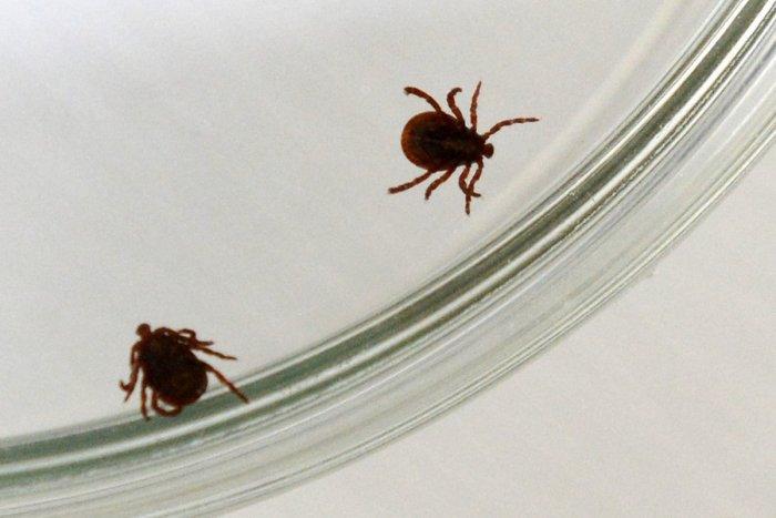 Ilustračný obrázok k článku Pozor na infikované kliešte v Banskobystrickom kraji: PREHĽAD lokalít, kde sa vyskytujú