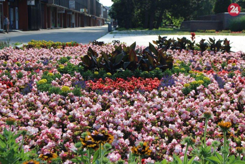 Ilustračný obrázok k článku Bystričania, pokochajte sa: Letné kvety zdobia centrum aj Kremničku, FOTO