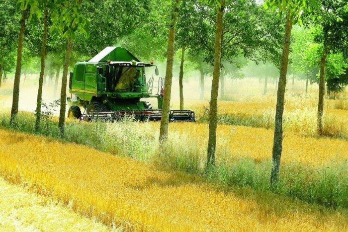 Ilustračný obrázok k článku Trnava má záujem zmeniť nudné polia na agrolesy