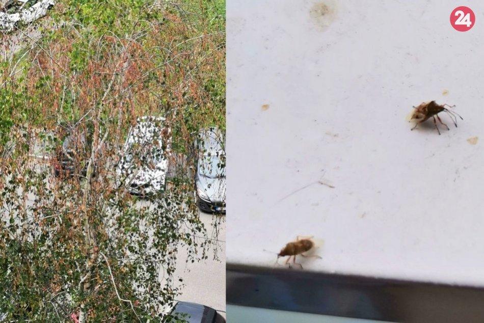 Ilustračný obrázok k článku Obyvateľov Nitry trápi nepríjemný hmyz: Mesto začalo s chemickým postrekom