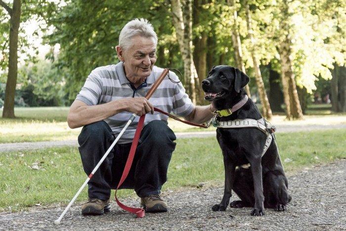 Ilustračný obrázok k článku Nevidiaci Imrich vycvičil niekoľko vodiacich psov: Dali mi samostatnosť, aj šťastie