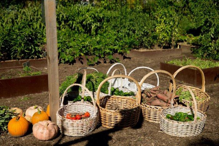 Ilustračný obrázok k článku Žiarska radnica prichádza s nápadom: TU môže vzniknúť nová záhradkárska oblasť