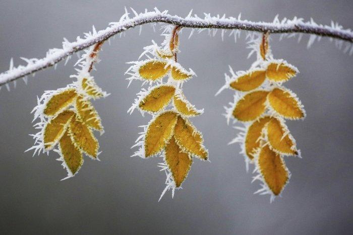 Ilustračný obrázok k článku Meteorológovia vydali výstrahu: Okres Zlaté Moravce varujú pred prízemným mrazom!