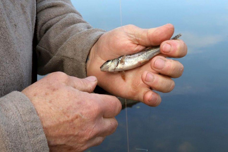 Ilustračný obrázok k článku Veľký zvrat v kauze predaja rybníkov v Považskej: Nariadili obnoviť vyšetrovanie