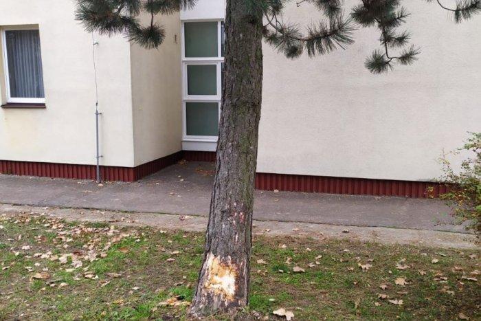Ilustračný obrázok k článku Nezabrzdené auto si to napálilo rovno do škôlky. TAKÉTO sú následky
