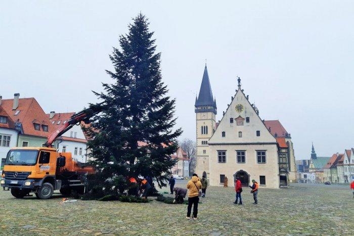 Ilustračný obrázok k článku Hneď priťahuje zvedavé oči: Dominantou Vianoc v Bardejove bude tento krásavec, FOTO