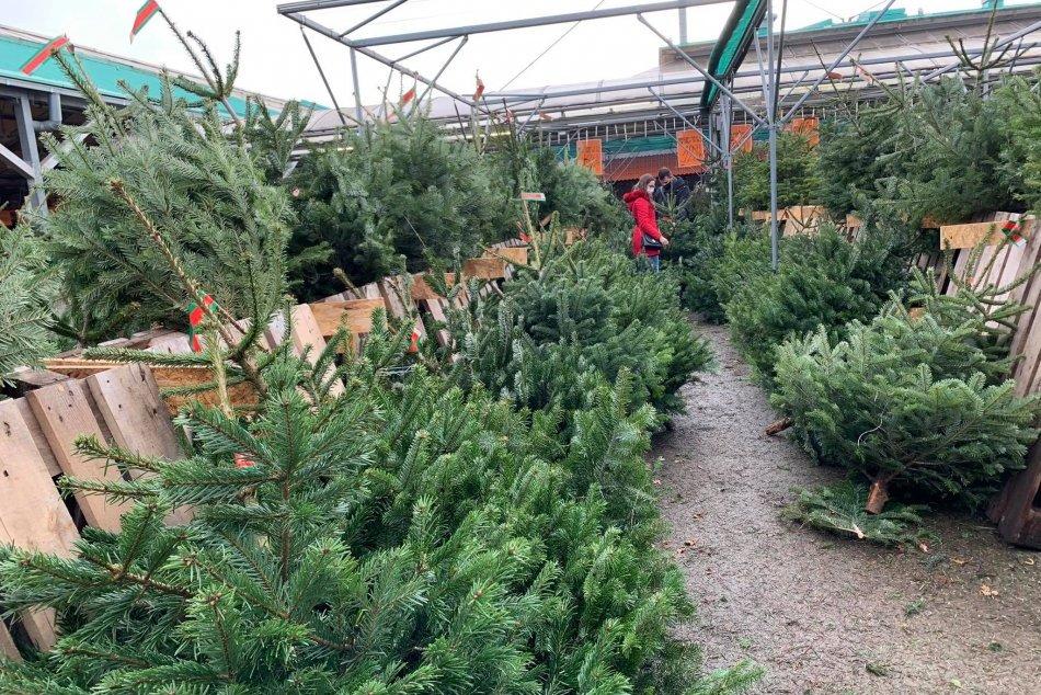 Ilustračný obrázok k článku Prvé korona Vianoce: Koľko nás tento rok vyjde vianočný stromček?