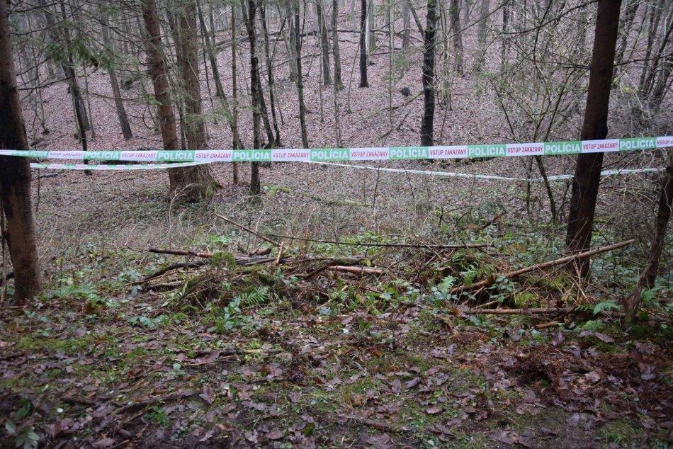 Ilustračný obrázok k článku Ochranári v údive po smrteľnom útoku medveďa: Prečo nás nezavolali na miesto tragédie?