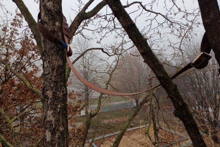 Ilustračný obrázok k článku Koruny petržalských stromov obkolesili remene. Čo to znamená?