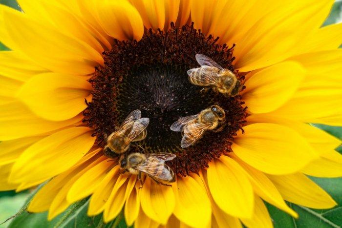 Ilustračný obrázok k článku V kultúrnom centre v Prievidzi sú usilovní ako včielky: Čo najnovšie pripravili?