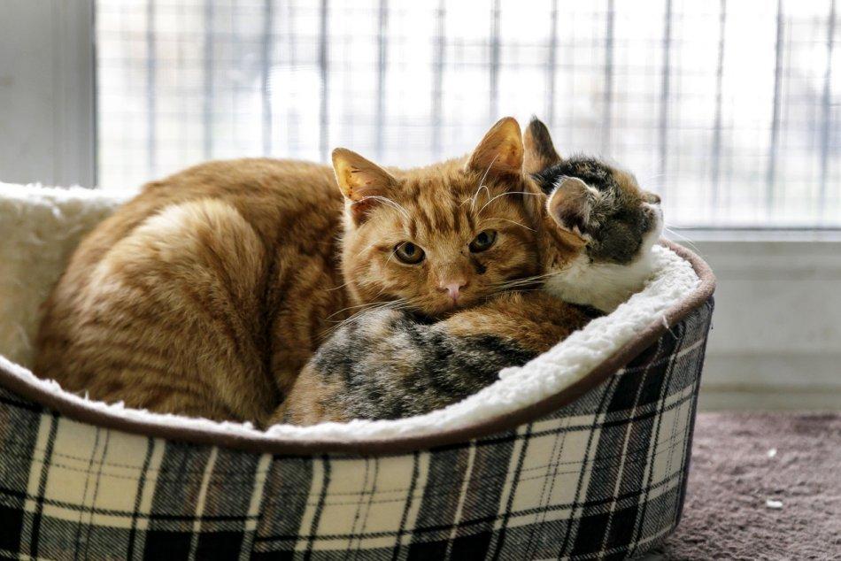 Ilustračný obrázok k článku Útok na mačku v záhrade rodinného domu v Trenčíne: Páchateľovi hrozí väzenie