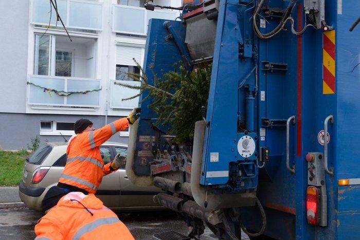Ilustračný obrázok k článku Mesto bude zbierať vianočné stromčeky po novom. Začína v Starom Meste