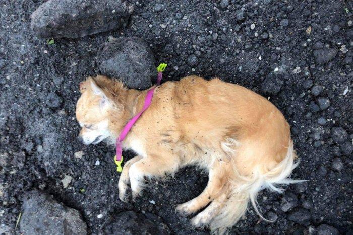 Ilustračný obrázok k článku Petardy a ohňostroje majú opäť obete: Mŕtve a splašené zvieratá