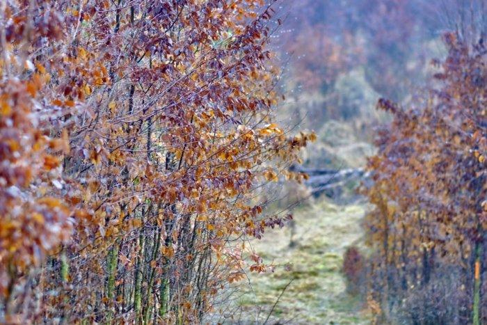 Ilustračný obrázok k článku Pozrite sa na tú nádheru: V mestských lesoch sprístupnili novú turistickú trasu
