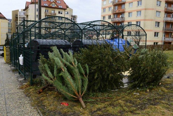 Ilustračný obrázok k článku V Humennom začali so zberom stromčekov. Kde ich máme ukladať?