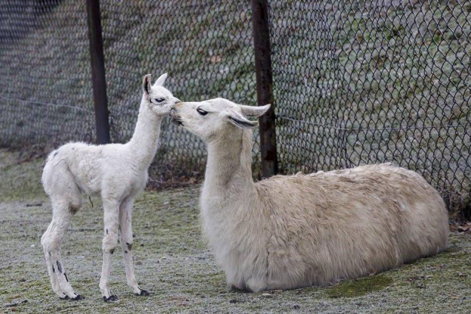 Ilustračný obrázok k článku Zoo kútik v Liptovskom Hrádku čakajú zmeny: Má byť oázou v uponáhľanom svete