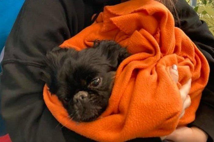 Ilustračný obrázok k článku Dráma s najhorším koncom: Malý psík nemal šancu prežiť