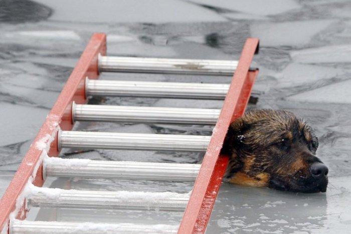Ilustračný obrázok k článku Riskoval život v ľadovej vode: Muž sa vrhol do Štrkoveckého jazera, aby zachránil psíka