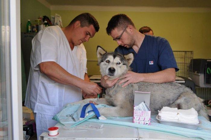 Ilustračný obrázok k článku Veterinári žiadajú skoršie očkovanie. Nechcú byť medzi poslednými