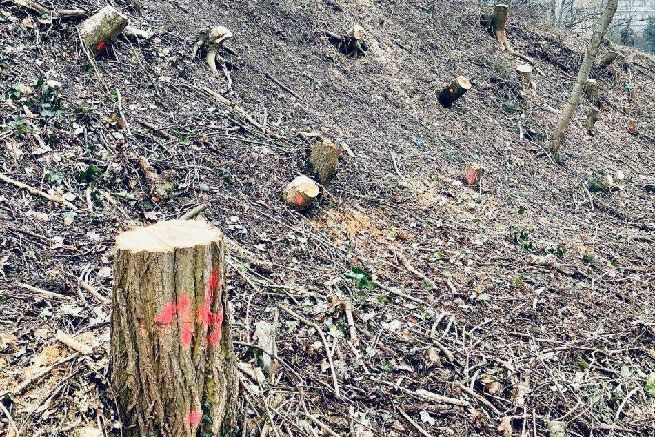 Ilustračný obrázok k článku Kto pri výrube stromov v Starom Meste pochybil? Samospráva nie, tvrdí starostka
