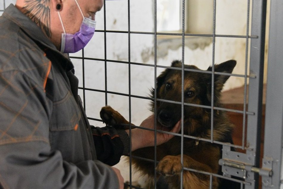 Ilustračný obrázok k článku Správca žiarskeho útulku: Niektorí ľudia majú na psíka bizarné požiadavky, VIDEO