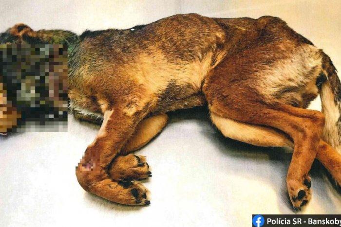 Ilustračný obrázok k článku Strašné, čo sa dialo neďaleko Lučenca: Psík bol utýraný k smrti, FOTO