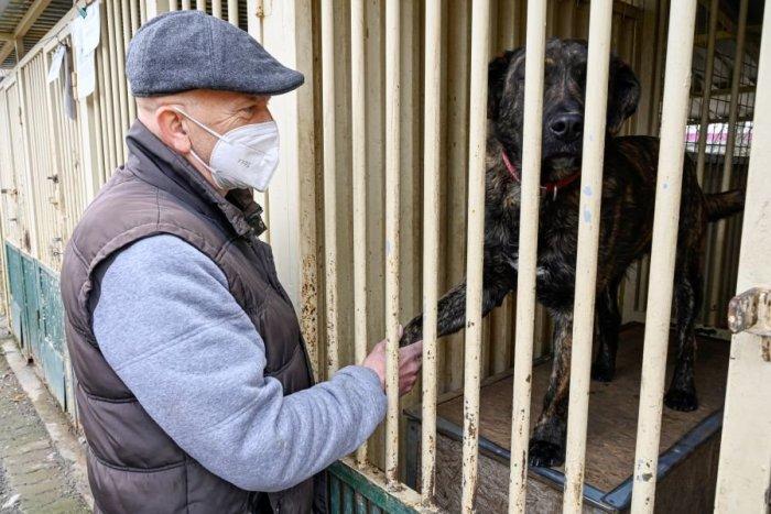 Ilustračný obrázok k článku Deň otvorených dverí v popradskom útulku: Prechádzka psov bude spojená so súťažami pre najmenších