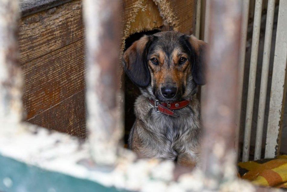 Ilustračný obrázok k článku Prešetria prípady týrania psov a zápasov v okrese Michalovce