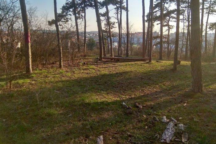 Ilustračný obrázok k článku Hrozivý nález v lese na Borine: V kríkoch ležali ľudské kosti
