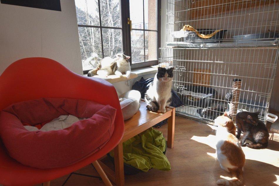 Ilustračný obrázok k článku Ľudia, ktorí v Bystrici zachraňujú mačičky: Smutné slová o tom, kde končia opustené, FOTO