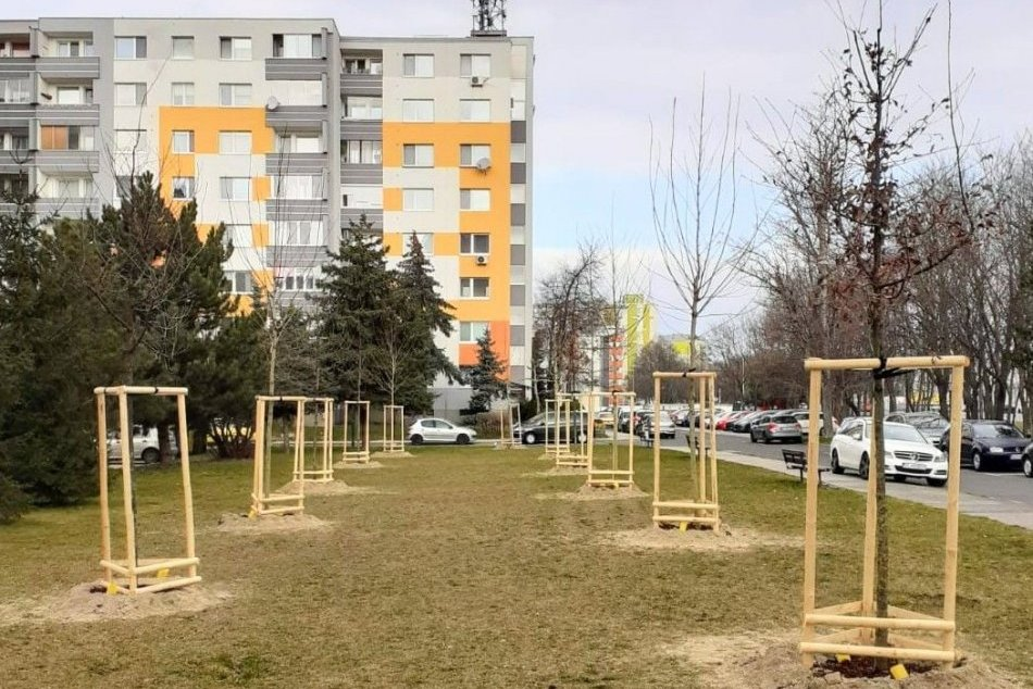 Ilustračný obrázok k článku V Lučenci prebehne výsadba: Mesto ľuďom poskytne stromčeky či kvety ZDARMA