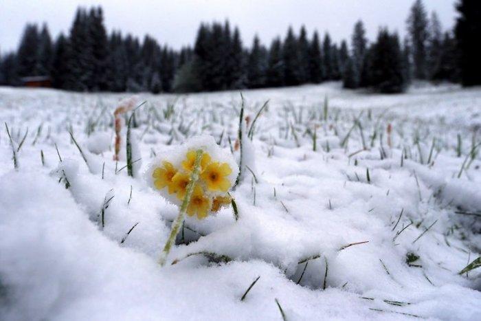 Ilustračný obrázok k článku Zima sa ešte neskončila! Kde v Bratislavskom kraji namerali až 24 centimetrov snehu?