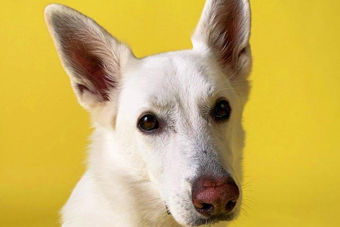 Ilustračný obrázok k článku Známy youtuber a Sloboda zvierat vytvorili prvého psieho chatbota