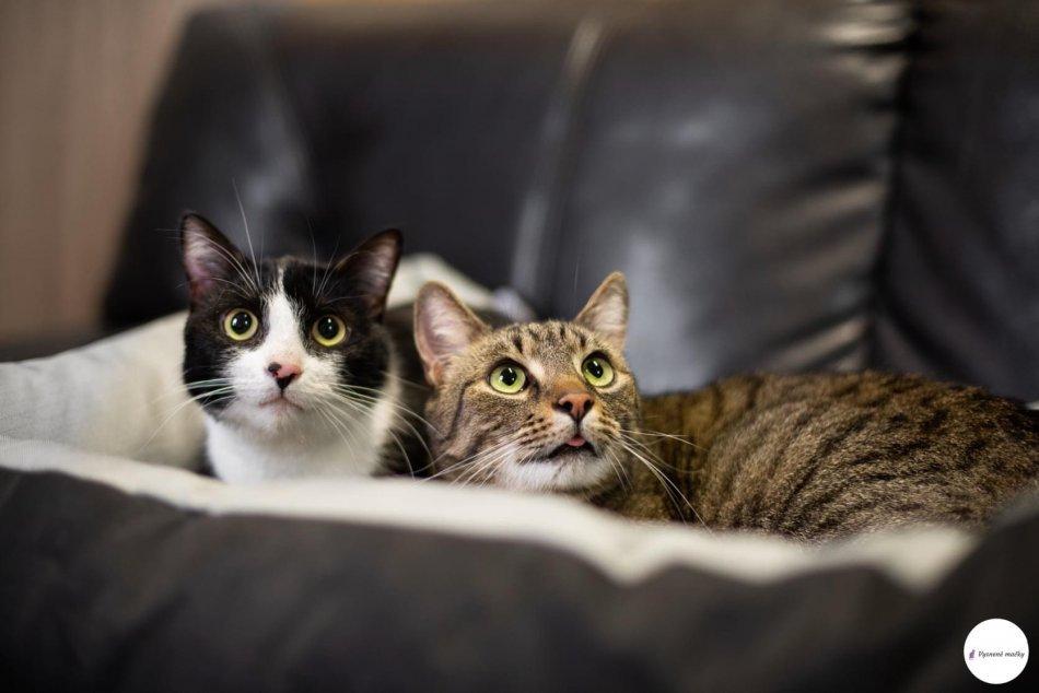 Ilustračný obrázok k článku Revúčania, pomôžte: Týmto mačičkám zomrela majiteľka, hľadajú nový domov, FOTO