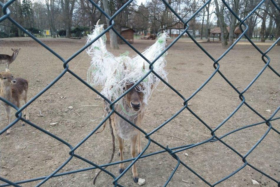 Ilustračný obrázok k článku Danielovi sa na parohy zamotalo roztrhané vrece: Zalarmovali veterinára