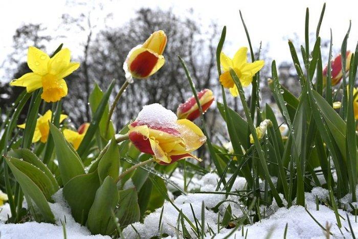 Ilustračný obrázok k článku Bude to koniec mrazom? Vyhliadky na najbližšie dni vyzerajú sľubne + PREDPOVEĎ
