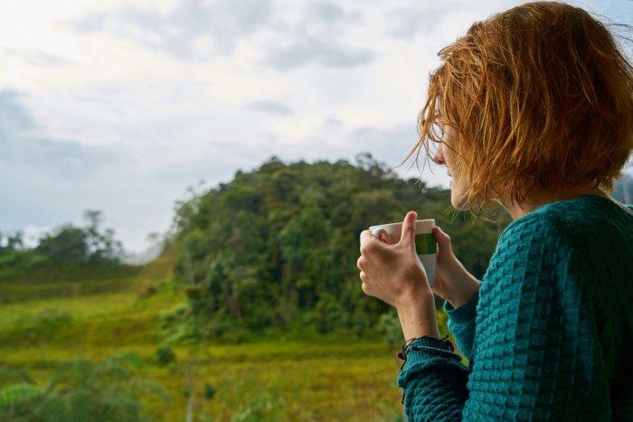 Ilustračný obrázok k článku Kofeín vie postaviť na nohy nielen nás! Vedci zistili, že dokáže nakopnúť aj lesy