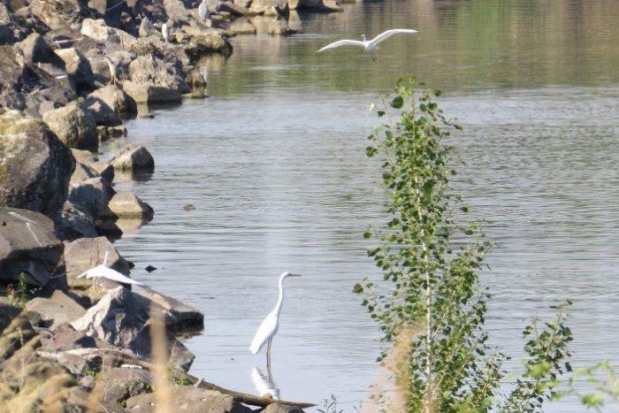 Ilustračný obrázok k článku Vzácnosti na Zemplínskej šírave a Senianskych rybníkoch, ktoré máme na vode