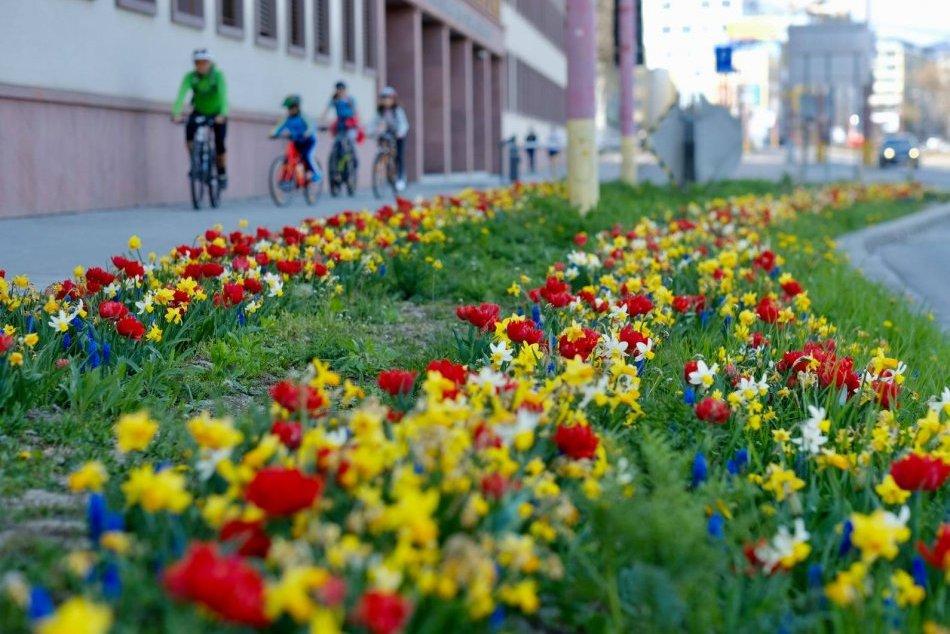 Ilustračný obrázok k článku OBRAZOM: Pozrite na tú nádheru! Bratislava je ako veľká rozkvitnutá záhrada