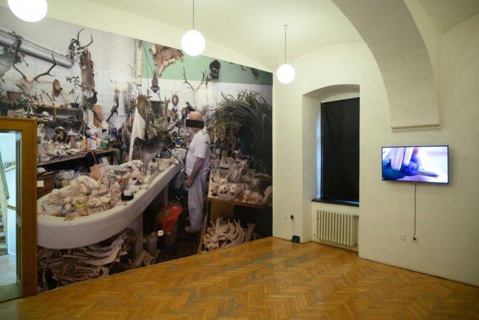 Ilustračný obrázok k článku Hor sa za kultúrou! Nitrianska galéria opäť sprístupní výstavy verejnosti