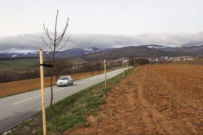 Ilustračný obrázok k článku Viac zelene pri cestách v okolí Košíc. Kraj vysadí stovky stromov