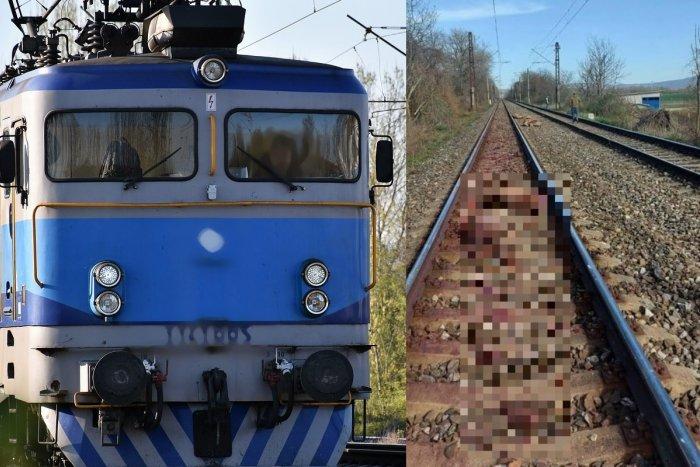 Ilustračný obrázok k článku Tragédia na železnici: Pod kolesami vlaku uhynula črieda jeleňov a laní, FOTO
