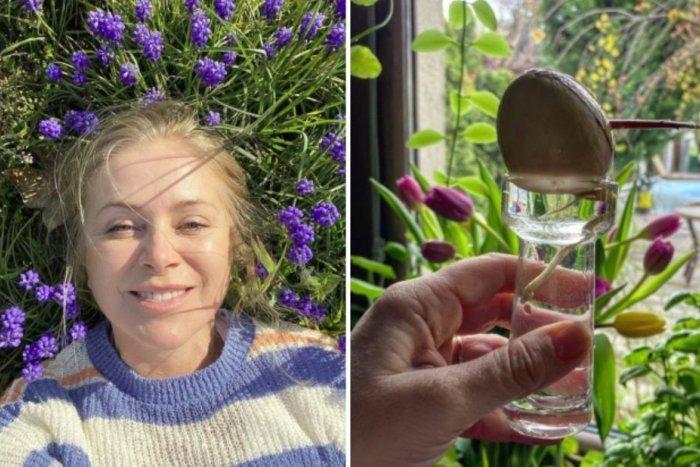 Ilustračný obrázok k článku Zuzana Vačková pestuje doma avokádo: Ukázala nám, ako to dokážete tiež!
