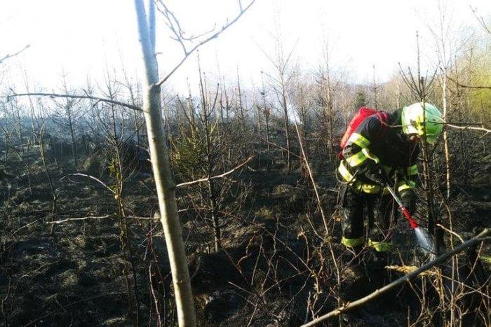 Ilustračný obrázok k článku Plamene zachvátili les pri Žiline: V akcii bolo vyše štyridsať hasičov! FOTO