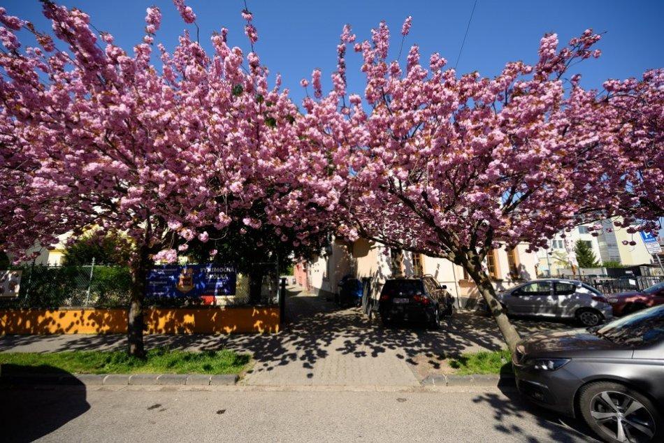 Ilustračný obrázok k článku Ulice Nitry budú o čosi krajšie: Mesto dá viac peňazí na starostlivosť o zeleň