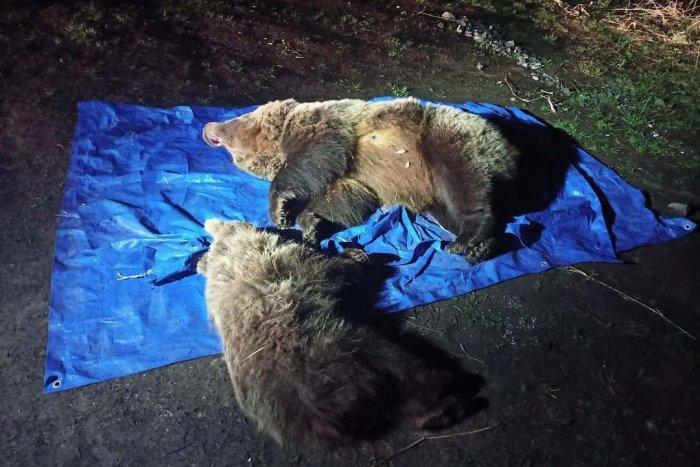 Ilustračný obrázok k článku Šokujúca FOTKA mŕtvych medveďov spustila lavínu hejtu: Čo sa vlastne stalo pri Sliezskom dome?