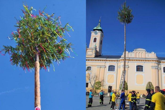Ilustračný obrázok k článku Na tradície nezanevreli: V Topoľčanoch postavili vysoký máj